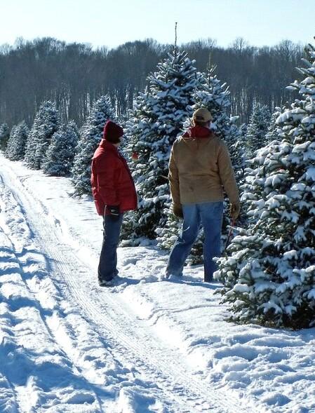 christmas_tree_farm.jpg
