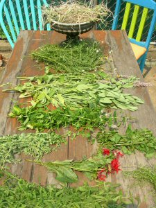fresh_cut_herbs_on_back_table_2006_web.jpg
