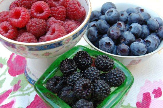 web_berry_trio_garden_summer_june_09_072.jpg