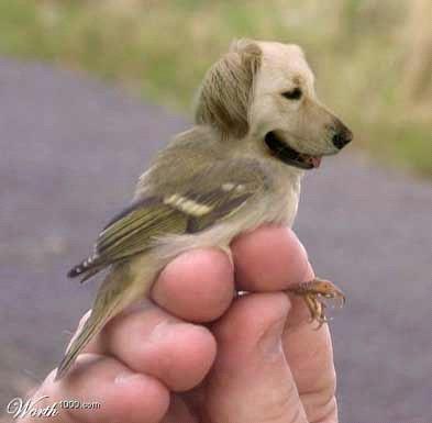 clone-dog-bird.jpg