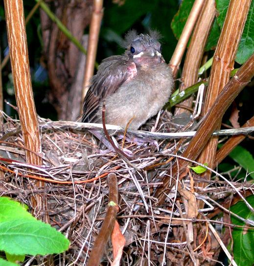 resize-baby-birds-effects.jpg