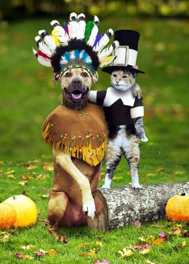 thanksgiving-cat-dog.jpg